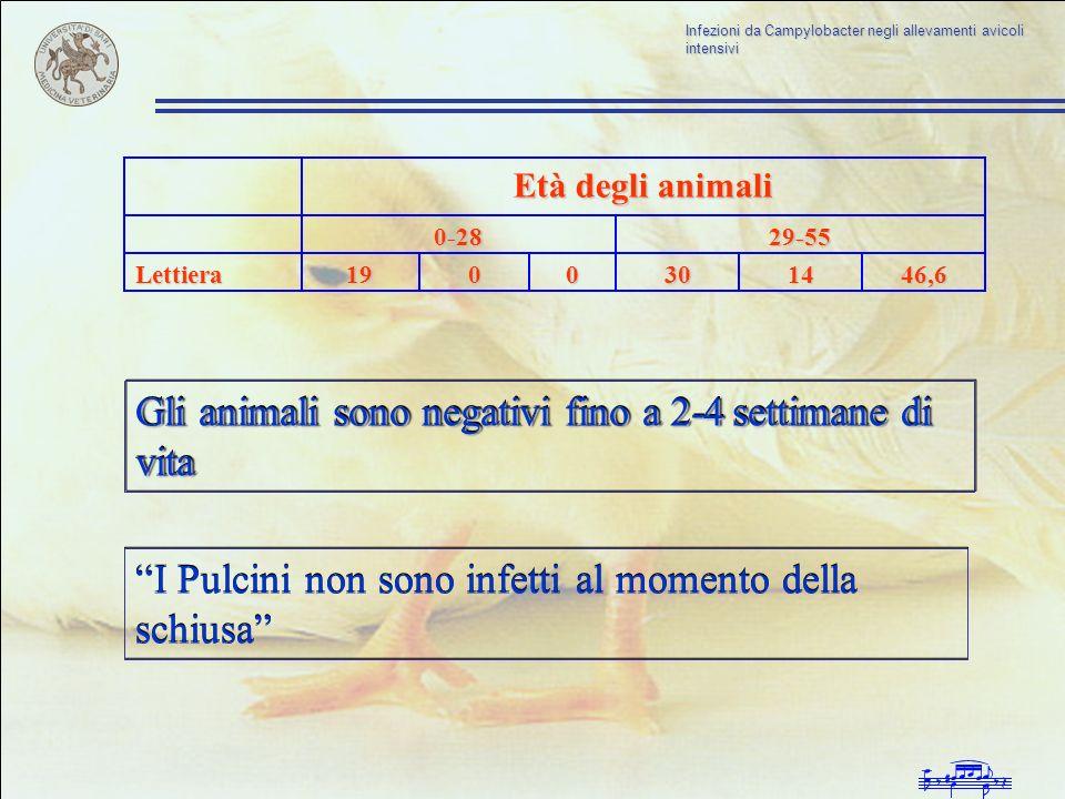 Infezioni da Campylobacter negli allevamenti avicoli intensivi 29-550-28 Età degli animali 46,614300019Lettiera Gli animali sono negativi fino a 2-4 s