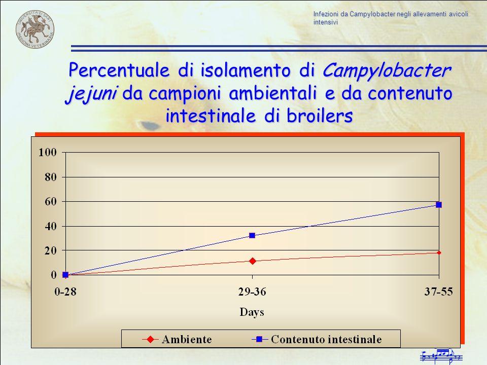 Infezioni da Campylobacter negli allevamenti avicoli intensivi Percentuale di isolamento di Campylobacter jejuni da campioni ambientali e da contenuto