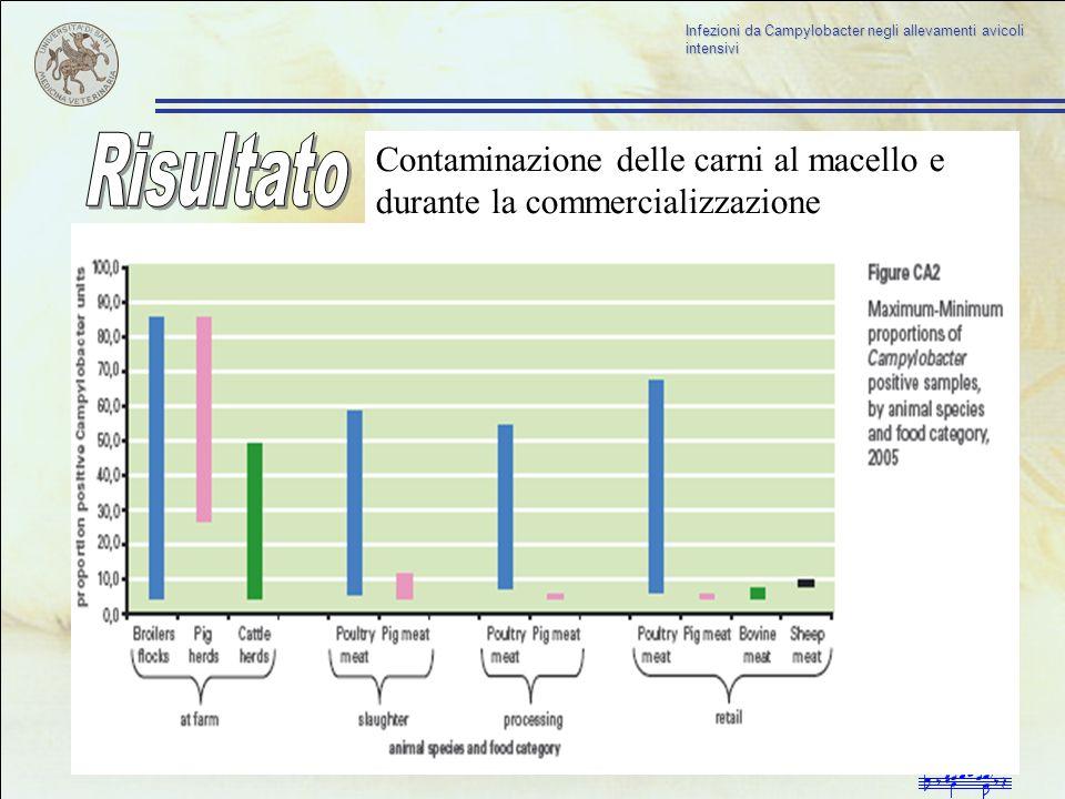 Infezioni da Campylobacter negli allevamenti avicoli intensivi Contaminazione delle carni al macello e durante la commercializzazione