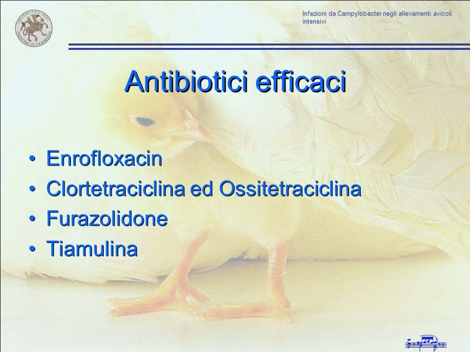 Infezioni da Campylobacter negli allevamenti avicoli intensivi Antibiotici efficaci Enrofloxacin Clortetraciclina ed Ossitetraciclina Furazolidone Tia