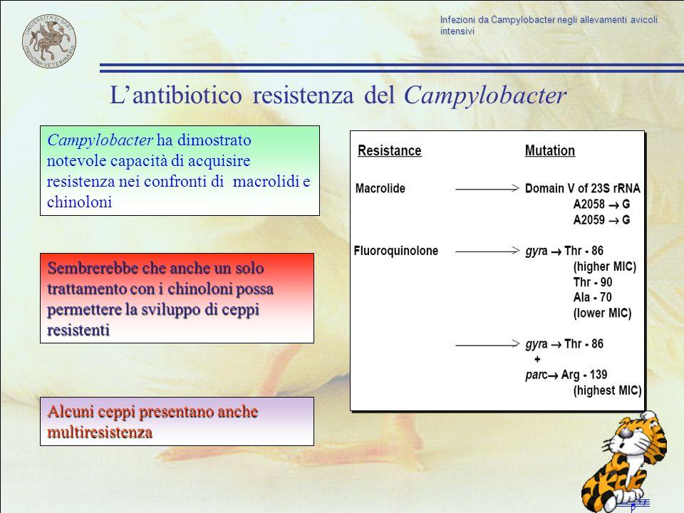Lantibiotico resistenza del Campylobacter Campylobacter ha dimostrato notevole capacità di acquisire resistenza nei confronti di macrolidi e chinoloni