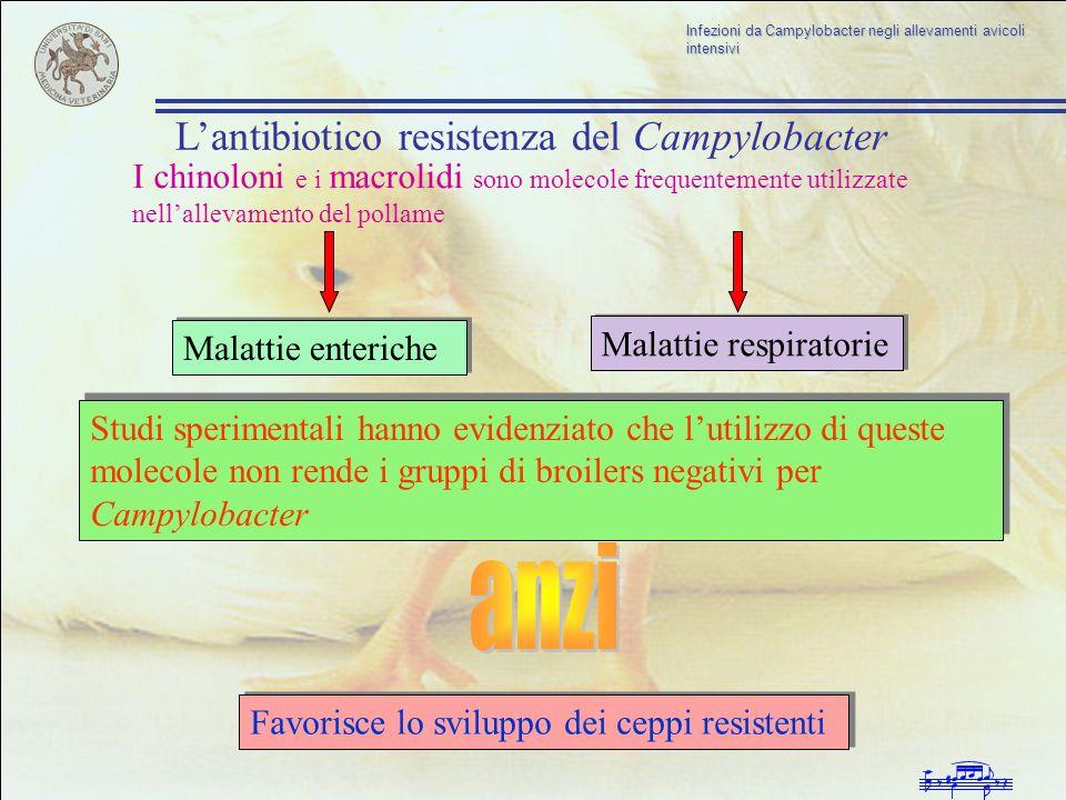 Infezioni da Campylobacter negli allevamenti avicoli intensivi I chinoloni e i macrolidi sono molecole frequentemente utilizzate nellallevamento del p