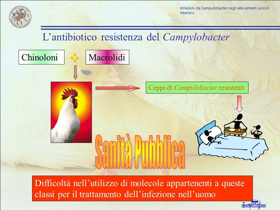 Infezioni da Campylobacter negli allevamenti avicoli intensivi Ceppi di Campylobacter resistenti ChinoloniMacrolidi Difficoltà nellutilizzo di molecol