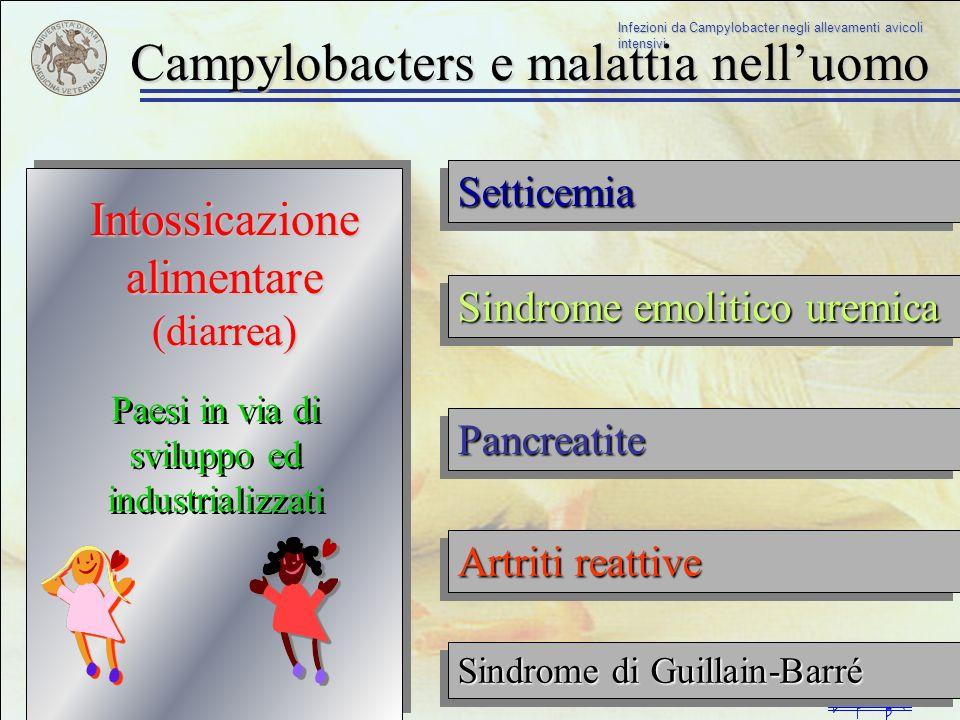 Infezioni da Campylobacter negli allevamenti avicoli intensivi La maggior parte delle infezioni da Campylobacter delluomo sono di tipo sporadico/individuale Contatto con animali domestici Contatto con animali Contatto e consumo di carne di pollo Contatto con acqua contaminata