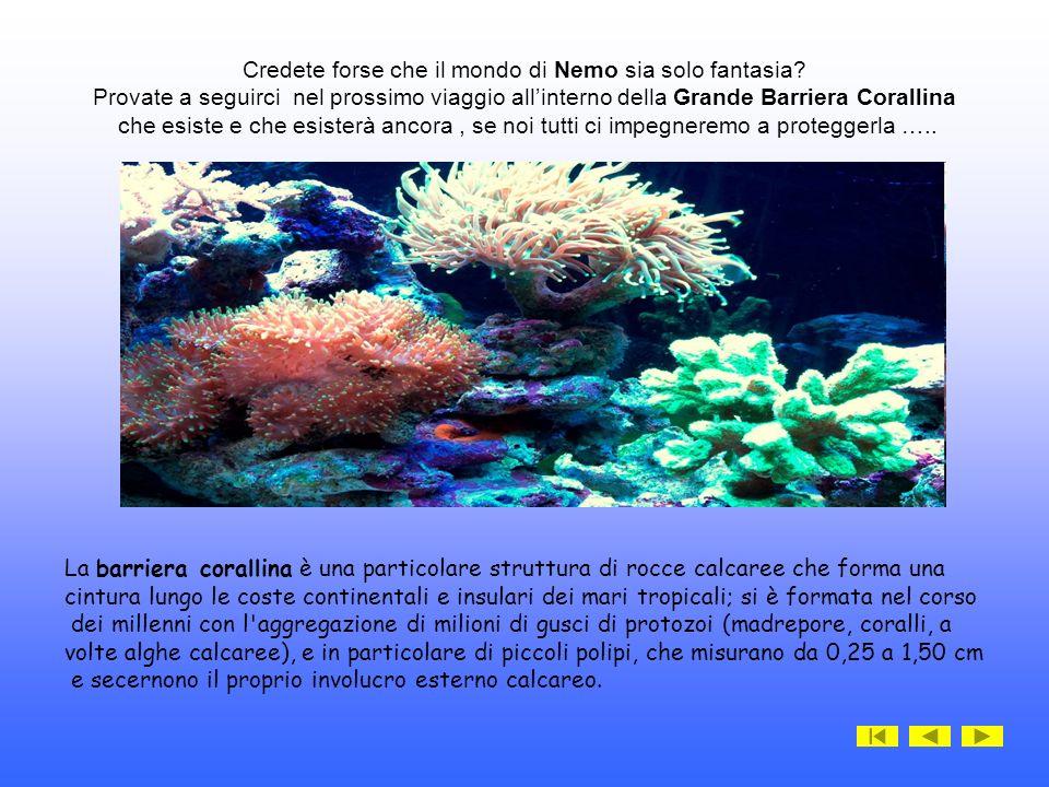 Credete forse che il mondo di Nemo sia solo fantasia.