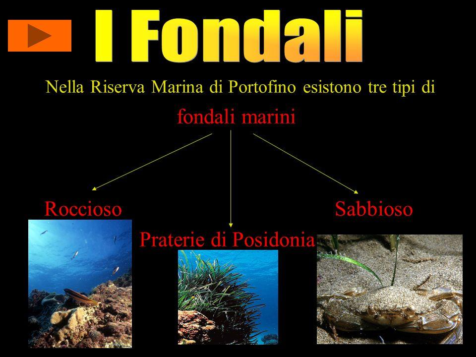 Nella Riserva Marina di Portofino esistono tre tipi di fondali marini Roccioso Sabbioso Praterie di Posidonia