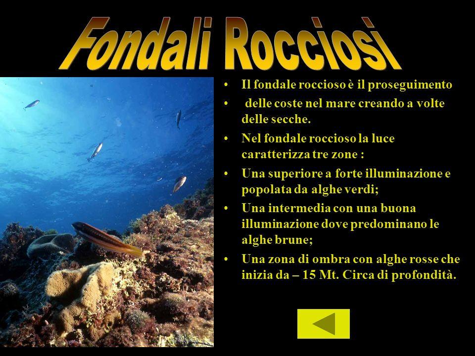 Il fondale roccioso è il proseguimento delle coste nel mare creando a volte delle secche. Nel fondale roccioso la luce caratterizza tre zone : Una sup