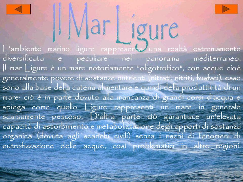 Lambiente marino ligure rappresenta una realtà estremamente diversificata e peculiare nel panorama mediterraneo. Il mar Ligure è un mare notoriamente