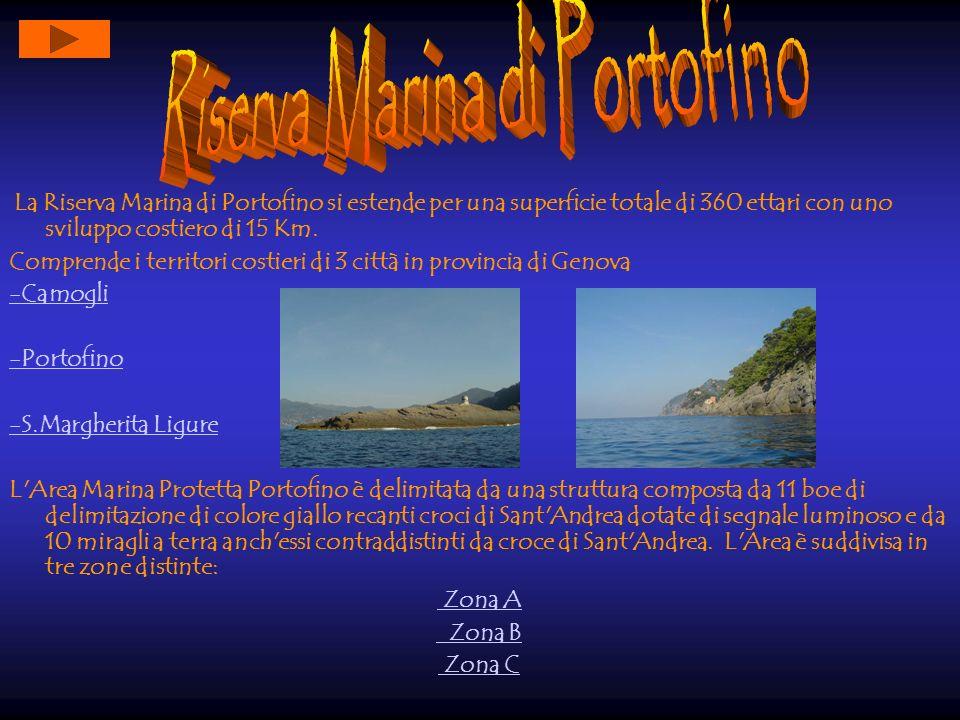 La Riserva Marina di Portofino si estende per una superficie totale di 360 ettari con uno sviluppo costiero di 15 Km. Comprende i territori costieri d