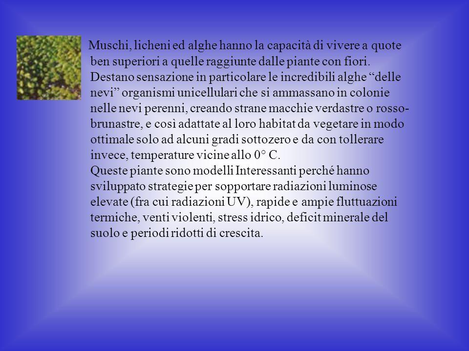 Muschi, licheni ed alghe hanno la capacità di vivere a quote ben superiori a quelle raggiunte dalle piante con fiori.