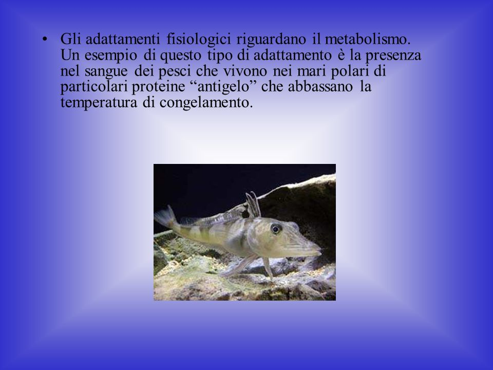 Gli adattamenti fisiologici riguardano il metabolismo.