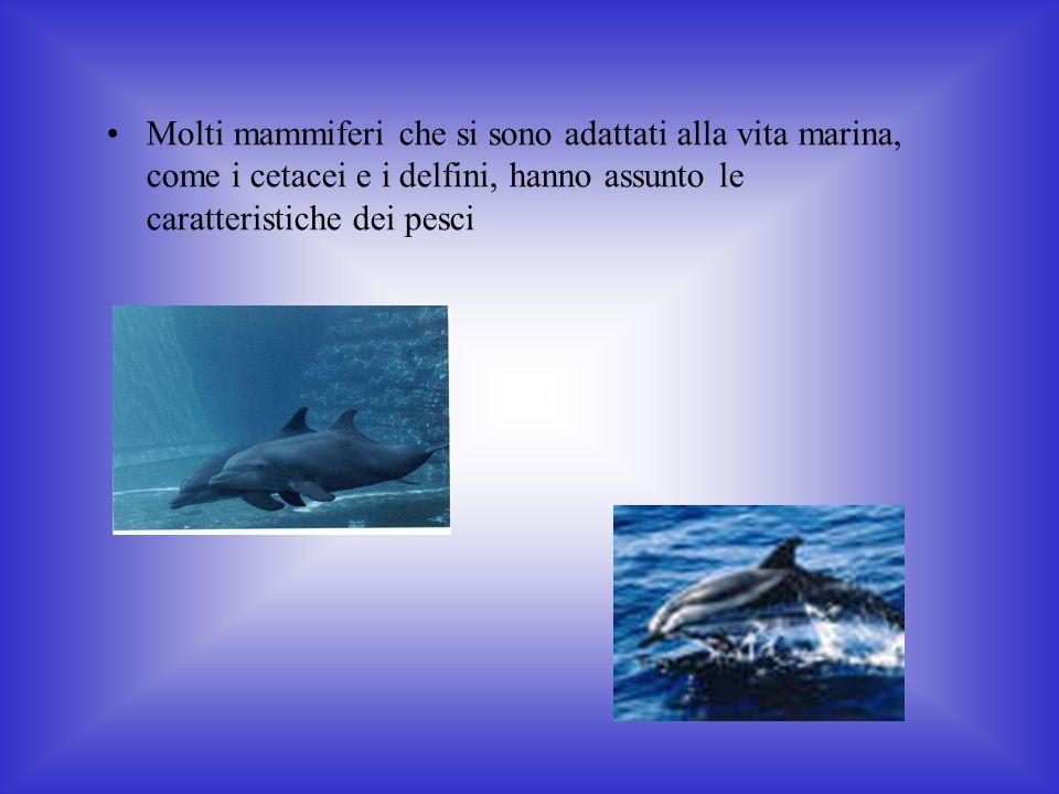 Molti mammiferi che si sono adattati alla vita marina, come i cetacei e i delfini, hanno assunto le caratteristiche dei pesci