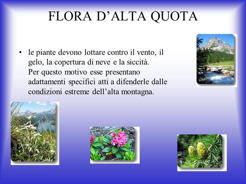 FLORA DALTA QUOTA le piante devono lottare contro il vento, il gelo, la copertura di neve e la siccità.