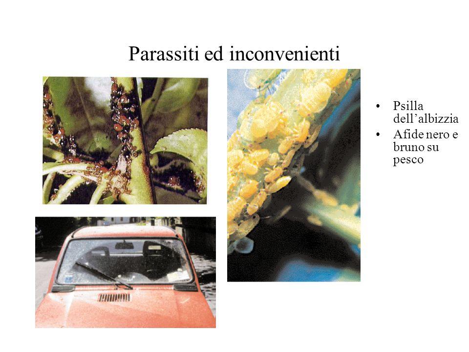 Parassiti ed inconvenienti Psilla dellalbizzia Afide nero e bruno su pesco