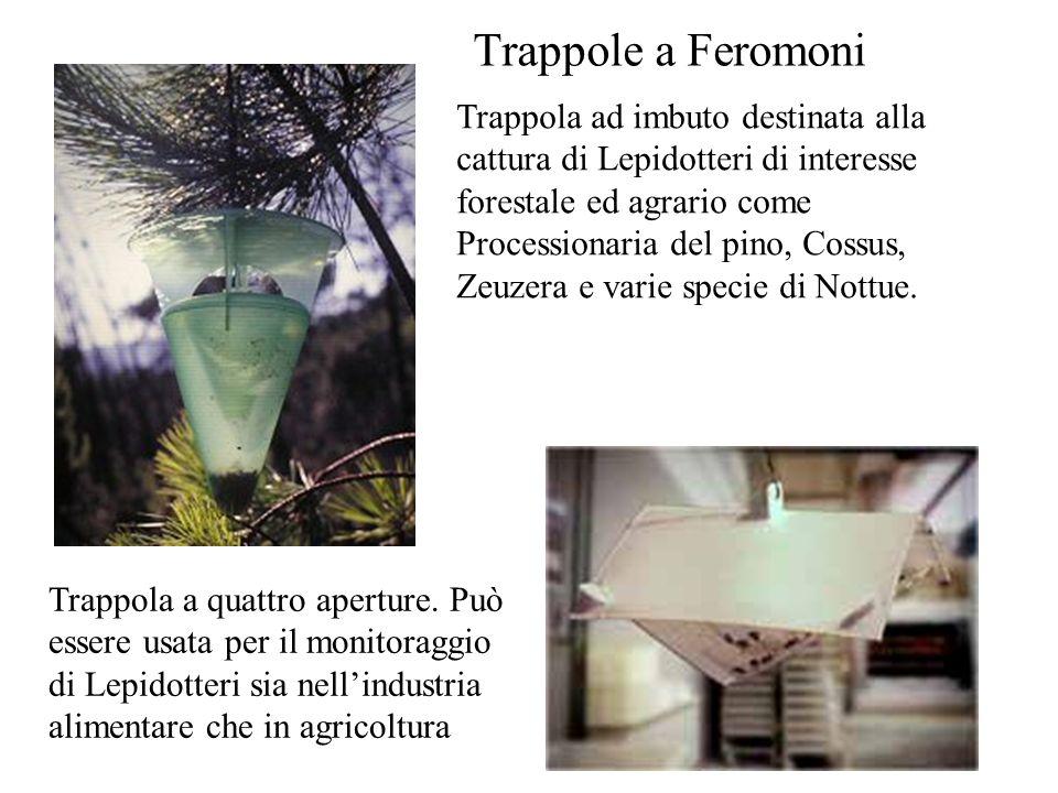 Trappola ad imbuto destinata alla cattura di Lepidotteri di interesse forestale ed agrario come Processionaria del pino, Cossus, Zeuzera e varie speci
