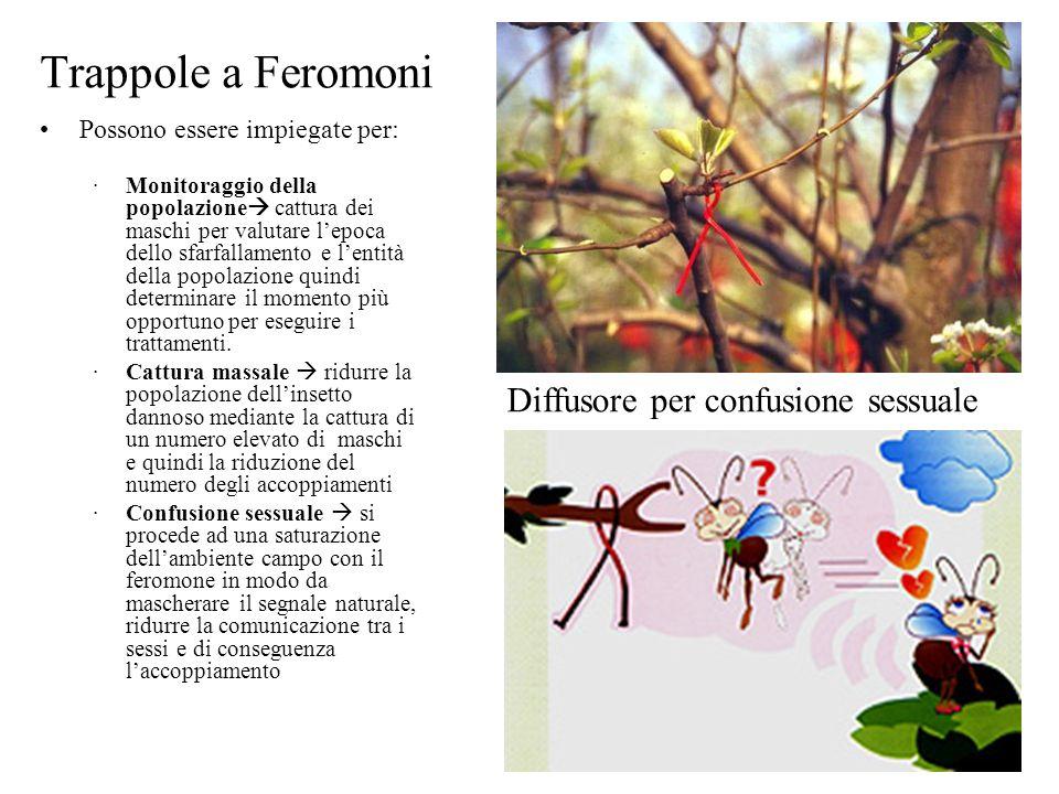Trappole a Feromoni Possono essere impiegate per: Monitoraggio della popolazione cattura dei maschi per valutare lepoca dello sfarfallamento e lentità