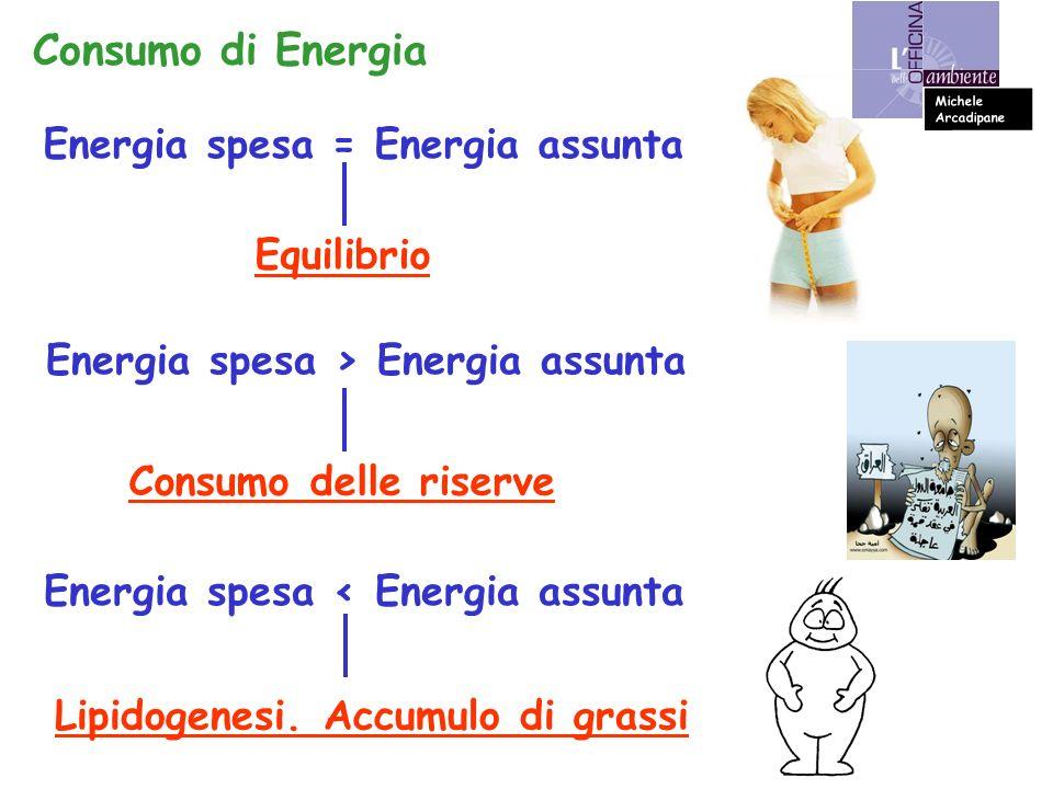 Energia spesa = Energia assunta Equilibrio Consumo di Energia Energia spesa > Energia assunta Consumo delle riserve Energia spesa < Energia assunta Lipidogenesi.