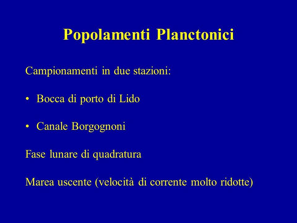 Popolamenti Planctonici Campionamenti in due stazioni: Bocca di porto di Lido Canale Borgognoni Fase lunare di quadratura Marea uscente (velocità di c