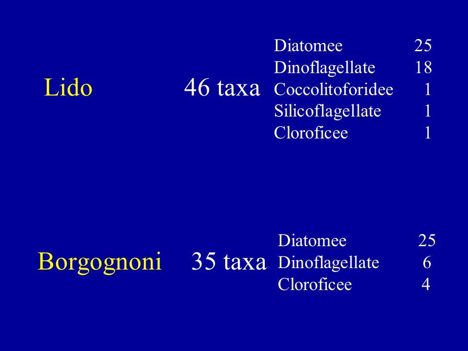 Diatomee 25 Dinoflagellate 18 Coccolitoforidee 1 Silicoflagellate 1 Cloroficee 1 Diatomee 25 Dinoflagellate 6 Cloroficee 4 Lido 46 taxa Borgognoni 35 taxa