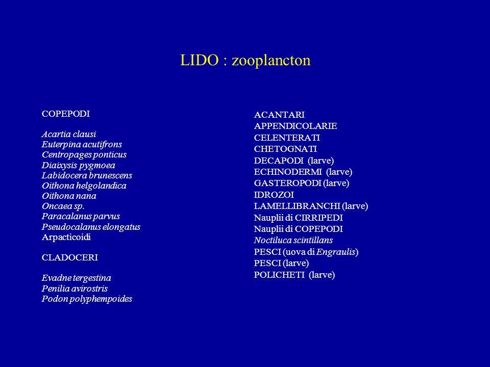 PRIME OSSERVAZIONI Numero più elevato di taxa nella bocca di porto di Lido anzichè nel canale Borgognoni Dinoflagellate e Cladoceri più rappresentativi a Lido Coccolitoforidee presenti con una sola specie al Lido Il copepode Acartia tonsa dominante (90%) e le Cloroficee (ad affinità dulciacquicola) più rappresentate a Borgognoni A Borgognoni maggior presenza di specie di origine bentonica risospese da processi di turbolenza (copepodi arpacticoidi ed alcune diatomee pennate) Mancano le nanoflagellate, rilevabili nei campioni fissati in formalina Liste finali a settembre