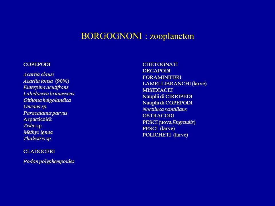BORGOGNONI : zooplancton COPEPODI Acartia clausi Acartia tonsa (90%) Euterpina acutifrons Labidocera brunescens Oithona helgolandica Oncaea sp. Paraca