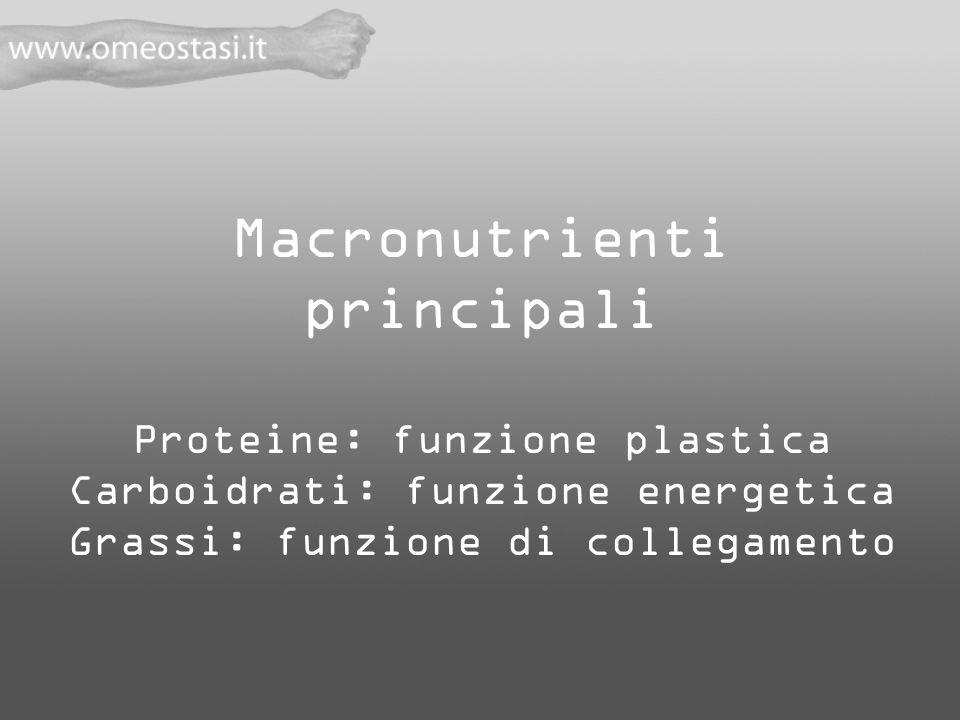 Macronutrienti principali Proteine: funzione plastica Carboidrati: funzione energetica Grassi: funzione di collegamento
