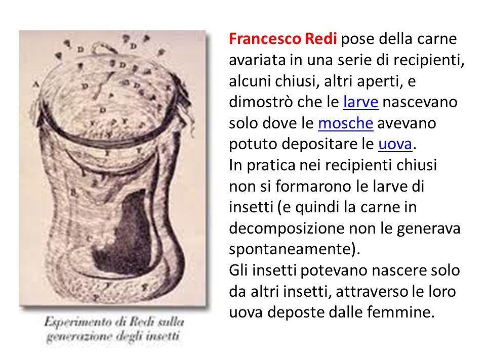 Francesco Redi pose della carne avariata in una serie di recipienti, alcuni chiusi, altri aperti, e dimostrò che le larve nascevano solo dove le mosch