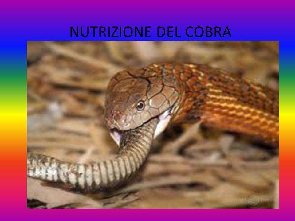 NUTRIZIONE DEL COBRA
