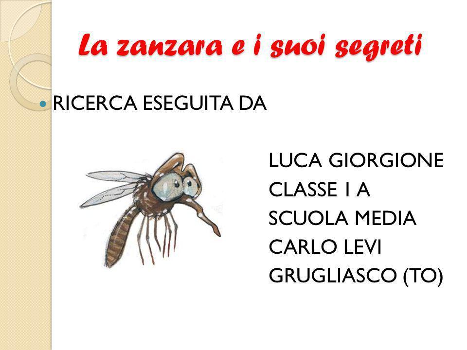 La zanzara e i suoi segreti RICERCA ESEGUITA DA LUCA GIORGIONE CLASSE 1 A SCUOLA MEDIA CARLO LEVI GRUGLIASCO (TO)