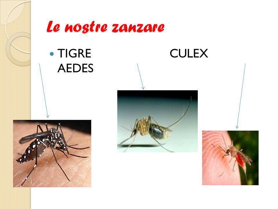 Le nostre zanzare TIGRE CULEX AEDES