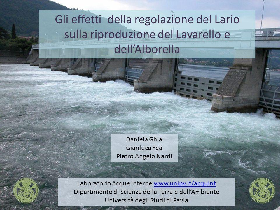 Gli effetti della regolazione del Lario sulla riproduzione del Lavarello e dellAlborella Laboratorio Acque Interne www.unipv.it/acquintwww.unipv.it/ac