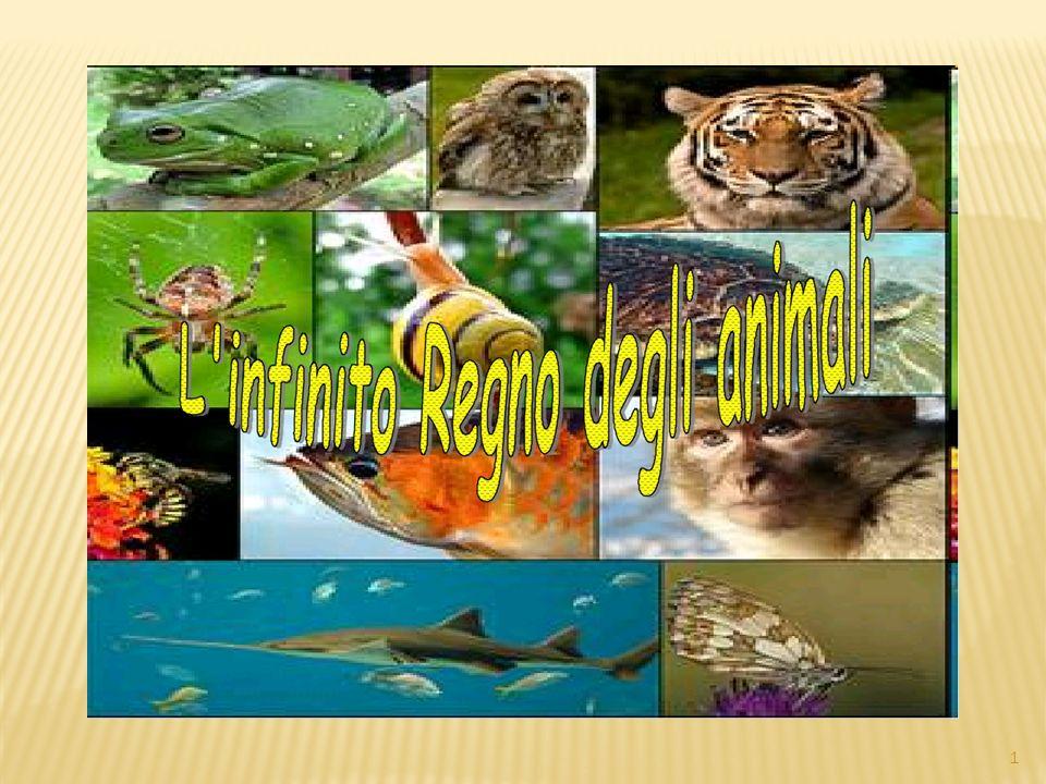 VERTEBRATI Rettili Anfibi Uccelli Pesci Mammiferi 22