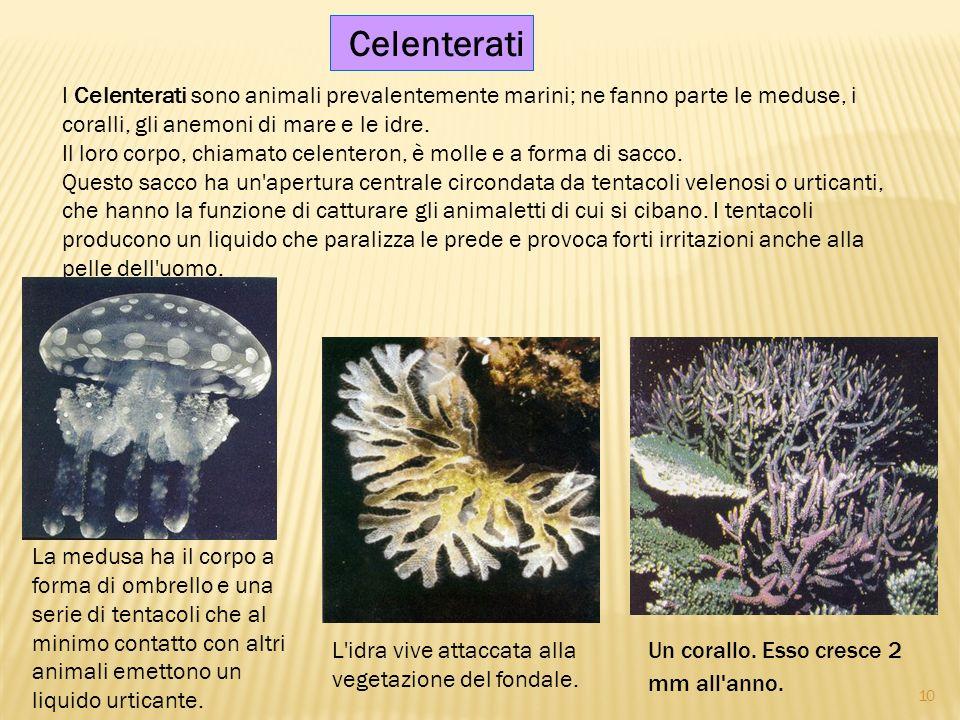 I Celenterati sono animali prevalentemente marini; ne fanno parte le meduse, i coralli, gli anemoni di mare e le idre. Il loro corpo, chiamato celente
