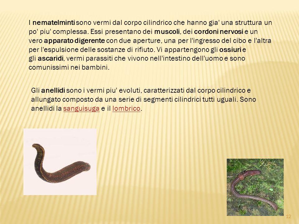 Gli anellidi sono i vermi piu' evoluti, caratterizzati dal corpo cilindrico e allungato composto da una serie di segmenti cilindrici tutti uguali. Son