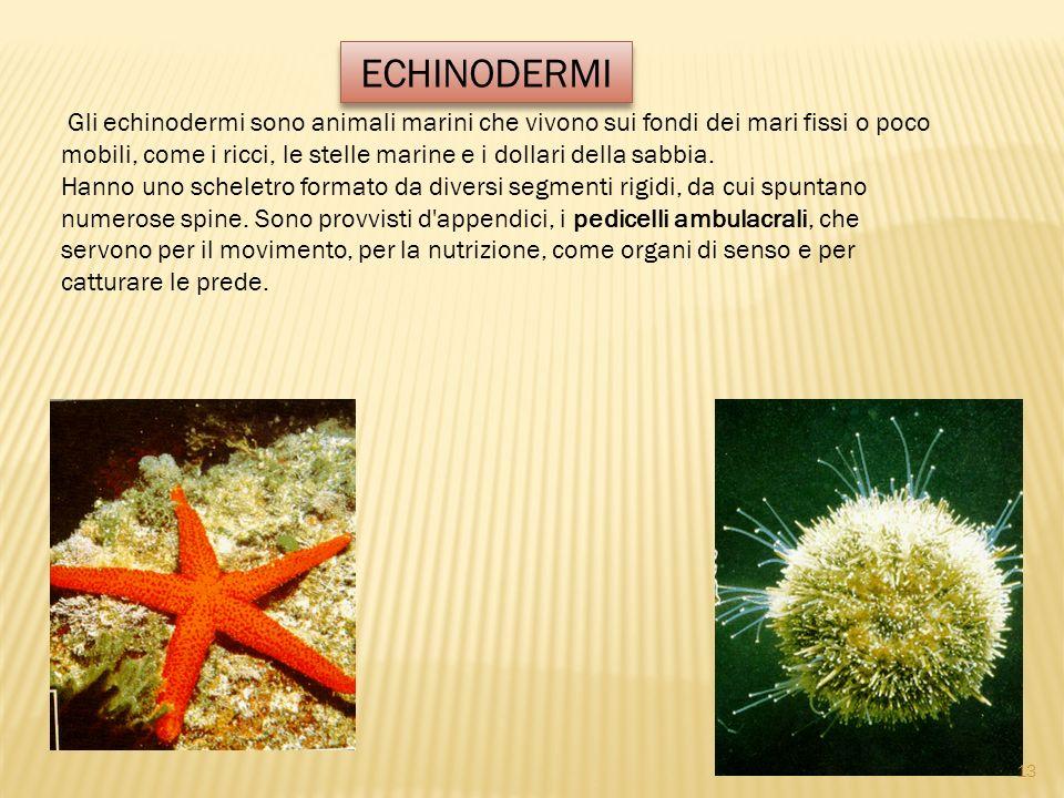 Gli echinodermi sono animali marini che vivono sui fondi dei mari fissi o poco mobili, come i ricci, le stelle marine e i dollari della sabbia. Hanno