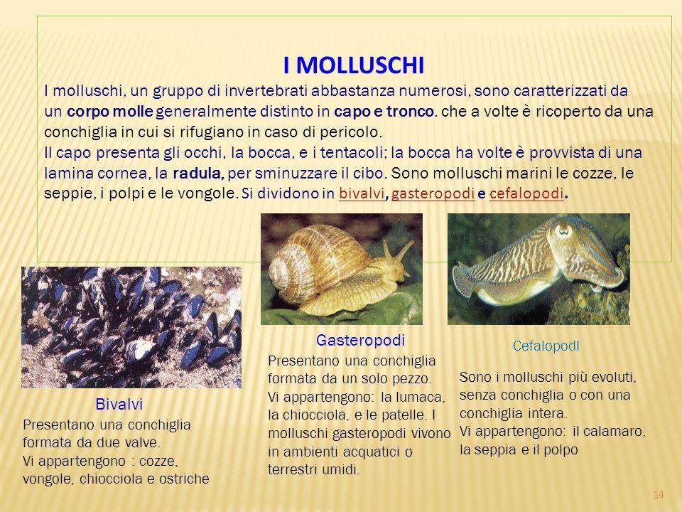 I MOLLUSCHI I molluschi, un gruppo di invertebrati abbastanza numerosi, sono caratterizzati da un corpo molle generalmente distinto in capo e tronco.