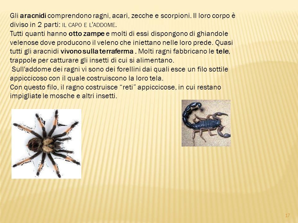 Gli aracnidi comprendono ragni, acari, zecche e scorpioni. Il loro corpo è diviso in 2 parti: IL CAPO E L ' ADDOME. Tutti quanti hanno otto zampe e mo