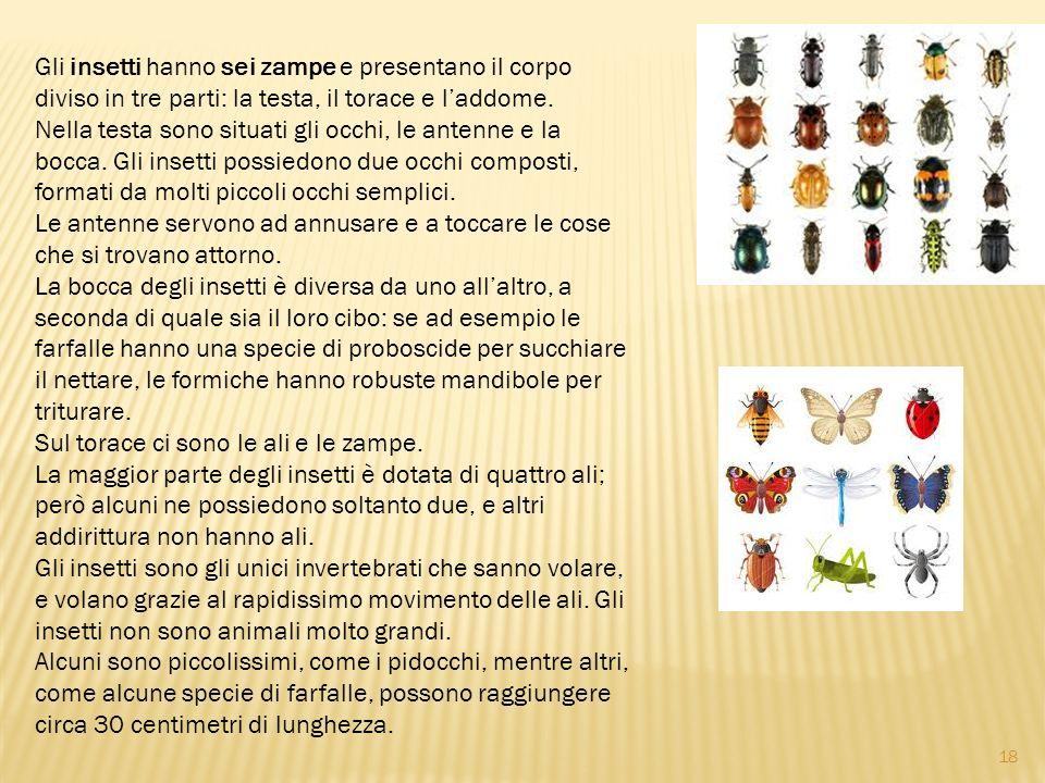 Gli insetti hanno sei zampe e presentano il corpo diviso in tre parti: la testa, il torace e laddome. Nella testa sono situati gli occhi, le antenne e