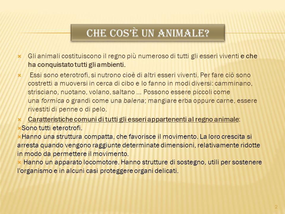 Gli animali costituiscono il regno più numeroso di tutti gli esseri viventi e che ha conquistato tutti gli ambienti. Essi sono eterotrofi, si nutrono