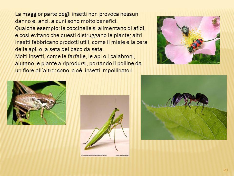 La maggior parte degli insetti non provoca nessun danno e, anzi, alcuni sono molto benefici. Qualche esempio: le coccinelle si alimentano di afidi, e