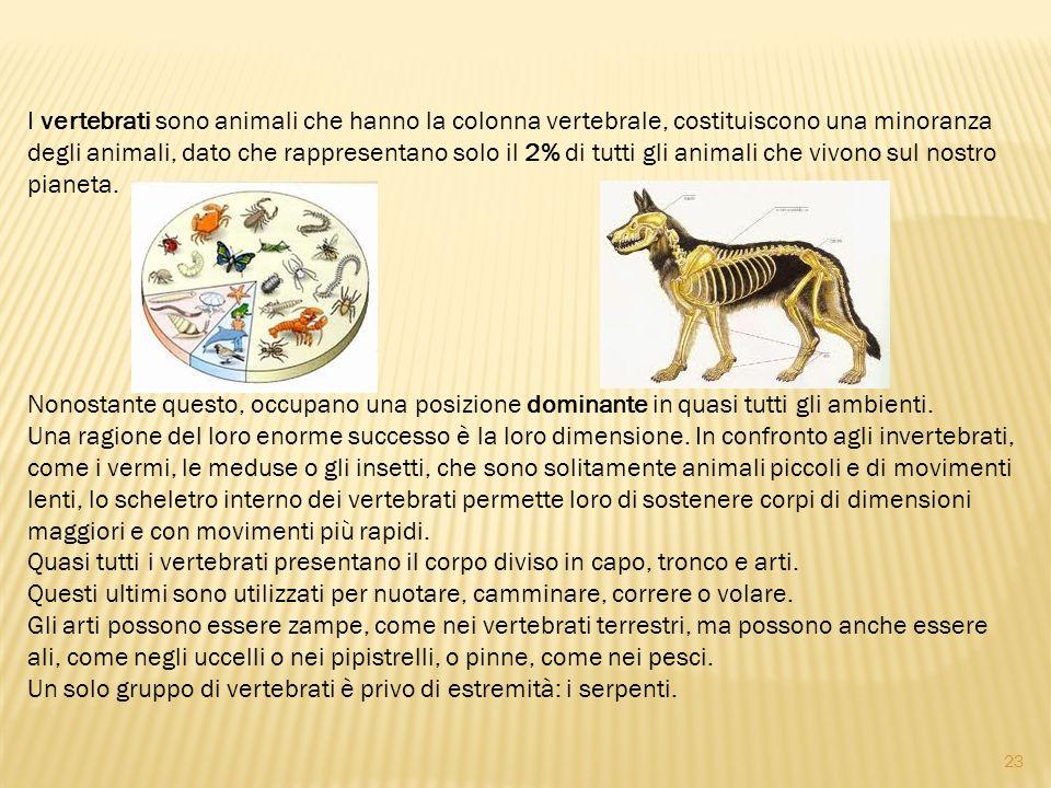 I vertebrati sono animali che hanno la colonna vertebrale, costituiscono una minoranza degli animali, dato che rappresentano solo il 2% di tutti gli animali che vivono sul nostro pianeta.