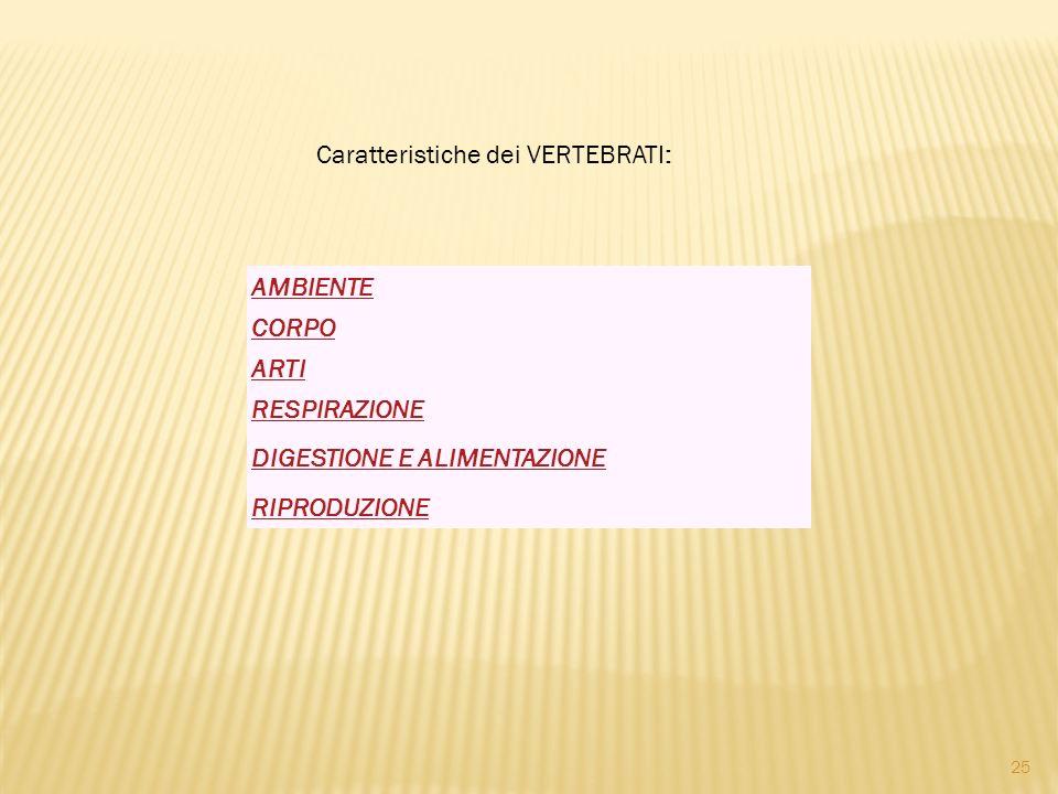 AMBIENTE CORPO ARTI RESPIRAZIONE DIGESTIONE E ALIMENTAZIONE RIPRODUZIONE Caratteristiche dei VERTEBRATI: 25