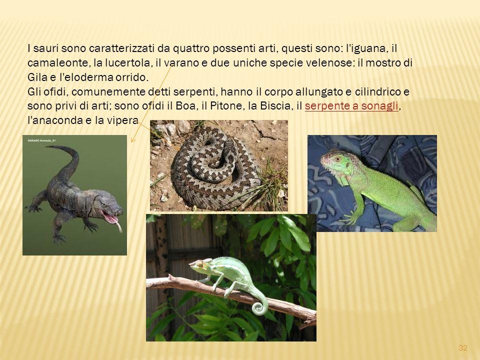 I sauri sono caratterizzati da quattro possenti arti, questi sono: l'iguana, il camaleonte, la lucertola, il varano e due uniche specie velenose: il m