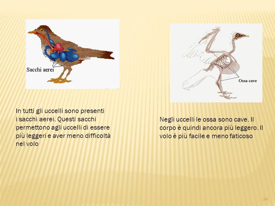 In tutti gli uccelli sono presenti i sacchi aerei. Questi sacchi permettono agli uccelli di essere più leggeri e aver meno difficoltà nel volo Negli u