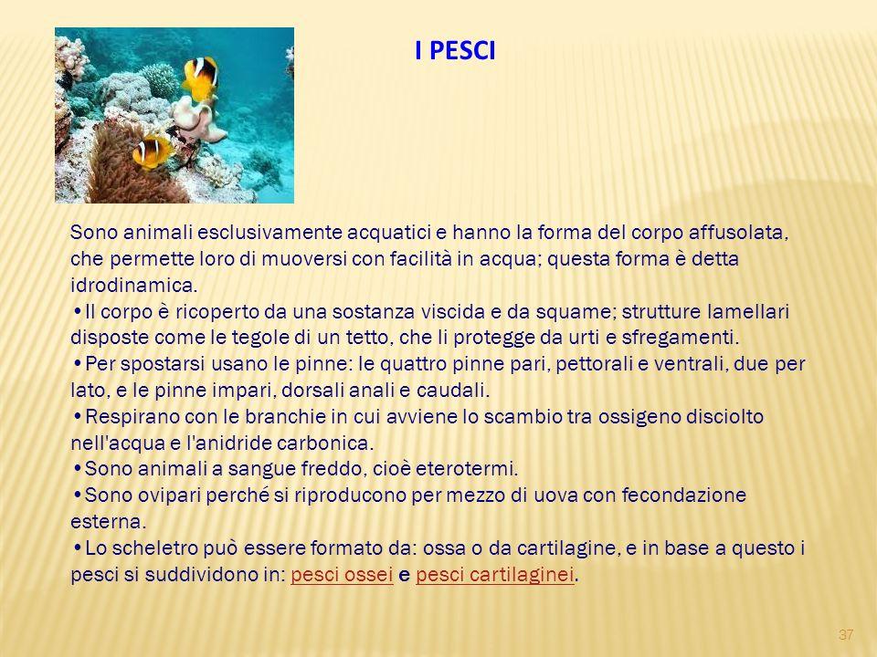 I PESCI Sono animali esclusivamente acquatici e hanno la forma del corpo affusolata, che permette loro di muoversi con facilità in acqua; questa forma è detta idrodinamica.