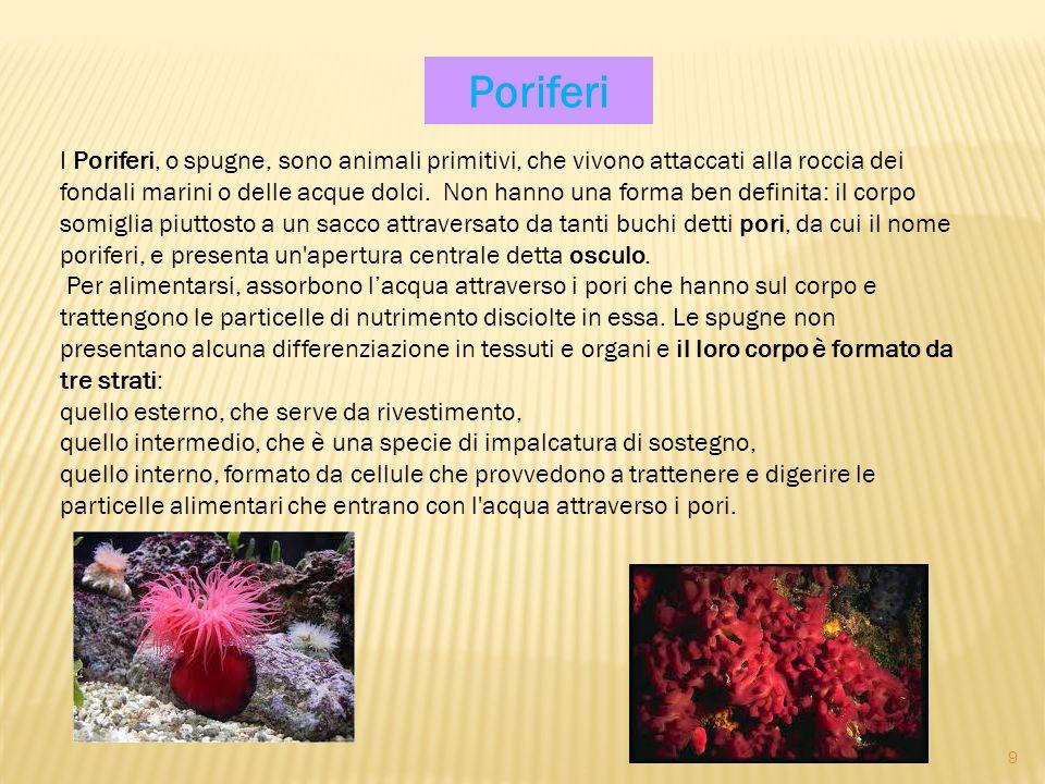 I Poriferi, o spugne, sono animali primitivi, che vivono attaccati alla roccia dei fondali marini o delle acque dolci. Non hanno una forma ben definit