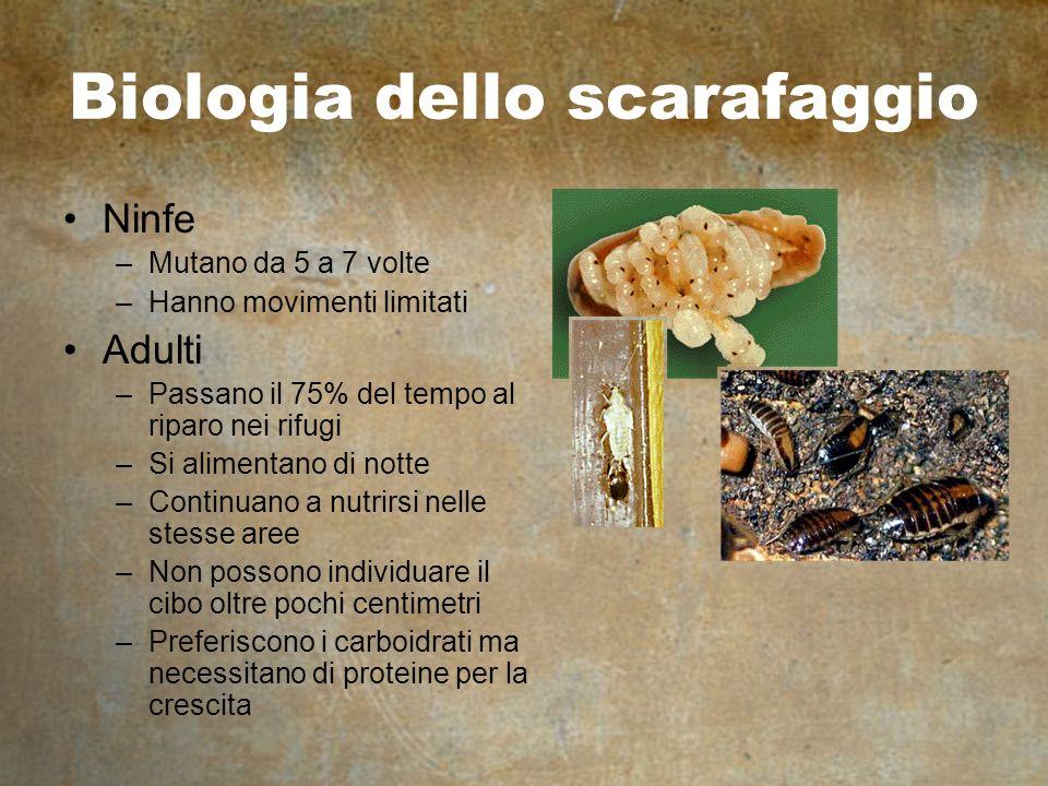 Biologia dello scarafaggio Ninfe –Mutano da 5 a 7 volte –Hanno movimenti limitati Adulti –Passano il 75% del tempo al riparo nei rifugi –Si alimentano