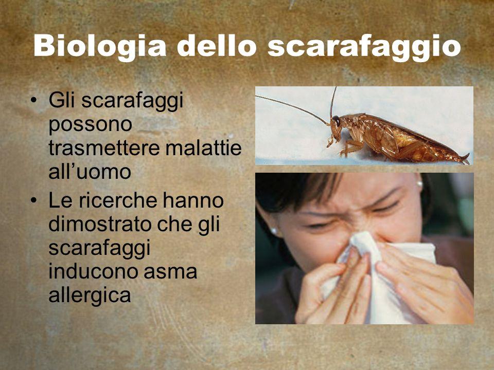 Biologia dello scarafaggio Gli scarafaggi possono trasmettere malattie alluomo Le ricerche hanno dimostrato che gli scarafaggi inducono asma allergica