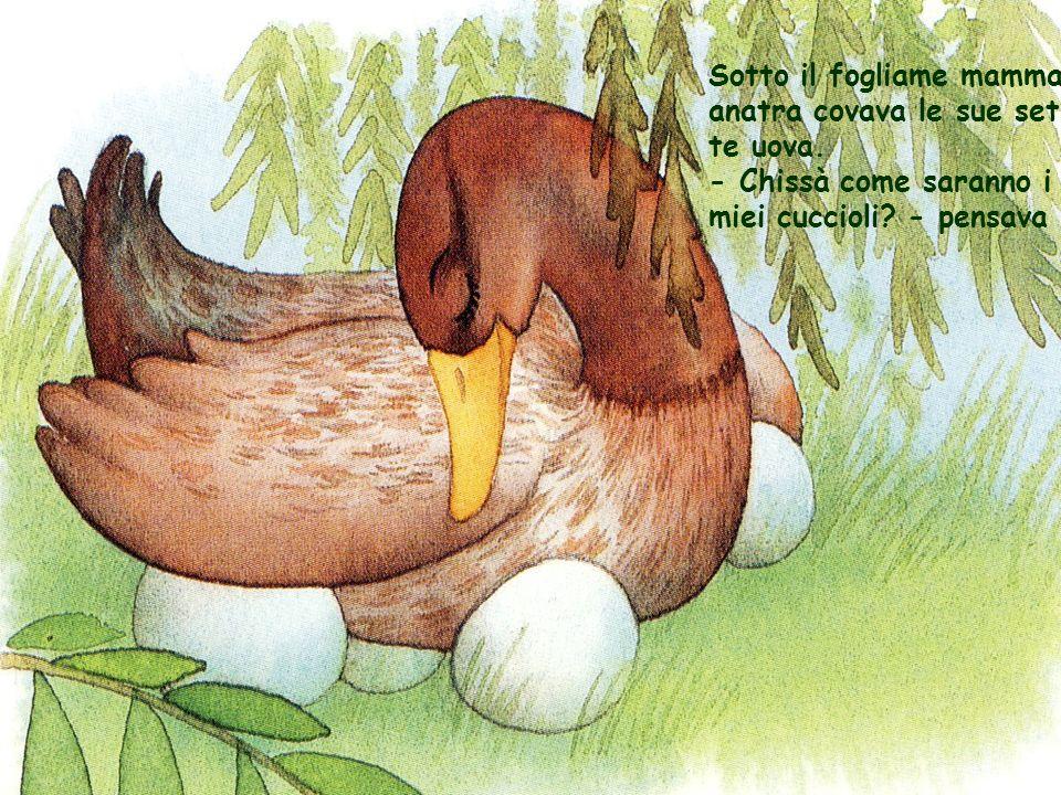 Finalmente una mattina la lunga attesa finì Le uova si schiusero e ne uscirono sei piccoli anatroccoli.