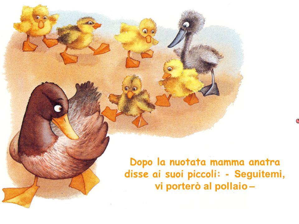 Dopo la nuotata mamma anatra disse ai suoi piccoli: - Seguitemi, vi porterò al pollaio –